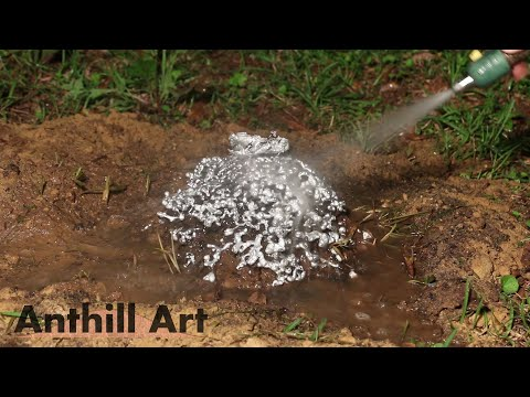 Five Fire Ant Colony Casting Session Part 1: Casts 1 & 2