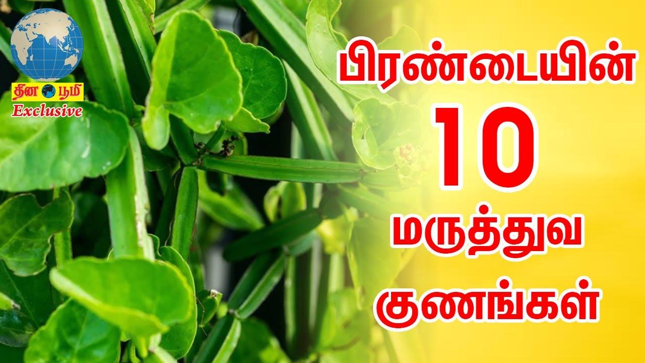 பிரண்டையின்10 மருத்துவ குணங்கள்| Prandai 10 health benefits|Veld Grape |K.தம்பிதுரை சித்த மருத்துவர்