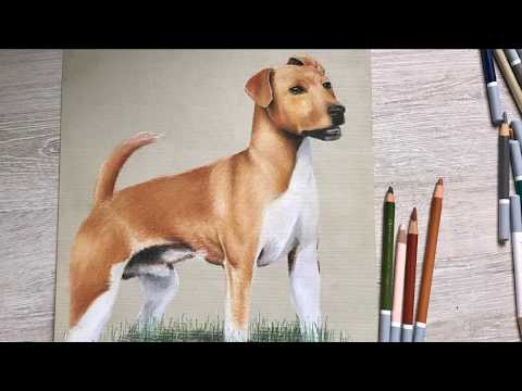 How to / Dog drawing timelapse - Alpha Art