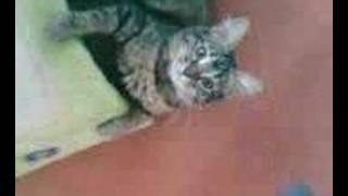 Nika, une chatte pas comme les autres