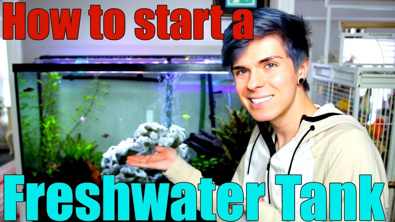 how-to-start-a-freshwater-aquarium-everything-you-need-to-know