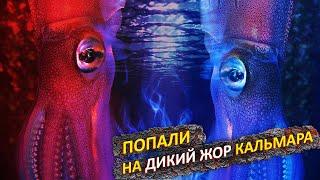 Попали на ЖОР КАЛЬМАРА Морская рыбалка во Владивостоке