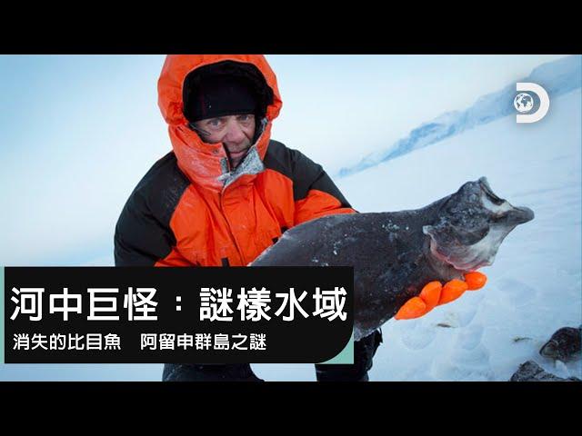 大比目魚跑哪去了?阿留申群島的魚群神秘現象-《河中巨怪:謎樣水域 阿留申群島之謎》12月14日,晚上9點播出