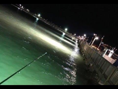 Port isabel fishing pirate 39 s landing pier youtube for Pirates landing fishing pier