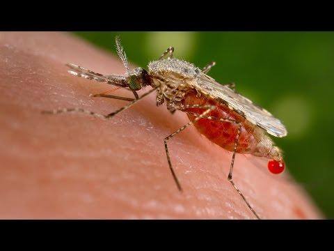 Open Source Malaria (OSM) Project - Alice Williamson [HD] Top 5 Under 40, ABC RN