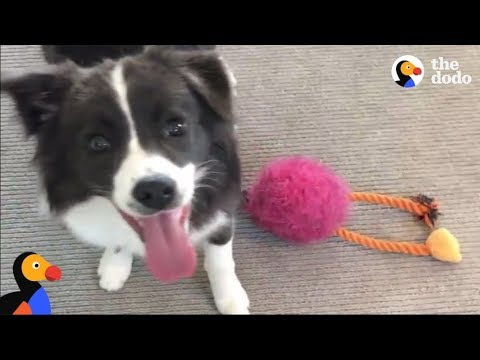 SMART Dog Knows Toys By Name | The Dodo