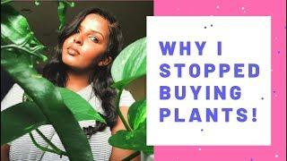 Why I stopped buying houseplants!