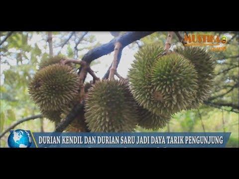 agrowisata-kampung-durian-nglawungan-destinasi-wisata-baru-di-blora