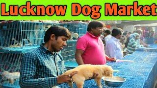 Dog Kennel in Lucknow At Kursi road   dog market in lucknow with price   best dog shop in lucknow