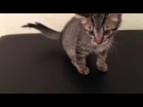 Foster Kitten Updates! Something Wrong with Tail!