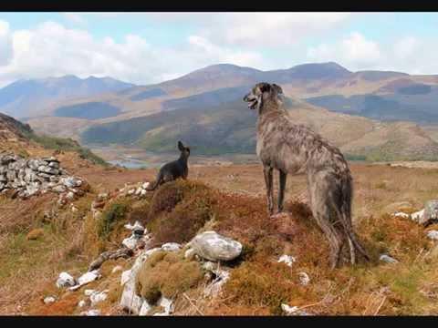 Obie the Deerhound/Greyhound