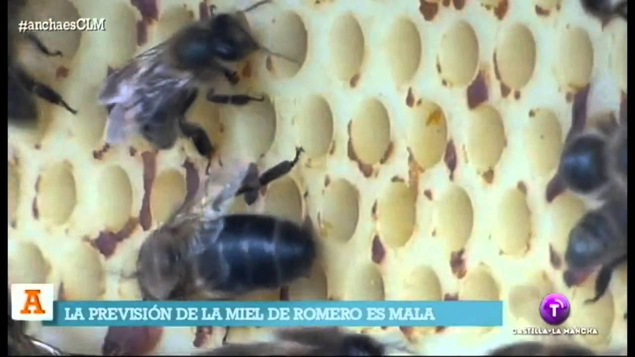 como hacer miel de romero casera