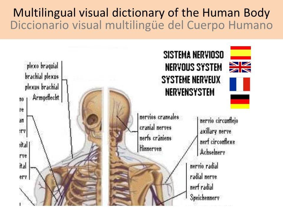 Human Body - Cuerpo humano - YouTube