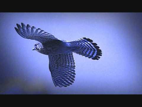 Dominik Eulberg - Der Traum vom Fliegen