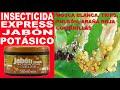 👉INSECTICIDA CASERO ECOLÓGICO 🕷️JABÓN POTÁSICO para Pulgón Mosca Blanca Araña Roja Cochinillas