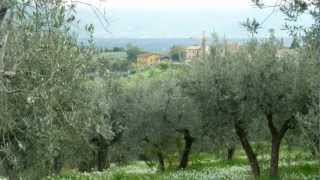 Olive Oil: How It