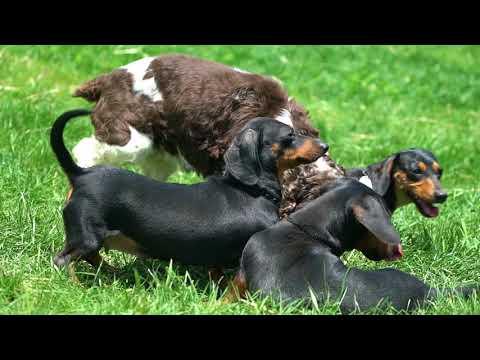 Meet Real Petland Breeders: Canine Farms