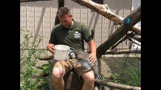 Animal Adventures with Jordan: Ring Tailed Lemur thumbnail