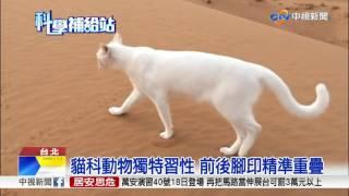 貓科動物獨特習性 前後腳印精準重疊│中視新聞20170516 thumbnail