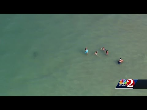 Damian Rhodes - Helicopter Catches Footage of Shark Close to Ocean Swimmers!