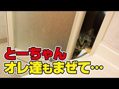 毎日お風呂場にいれろとやってくる猫さん達!
