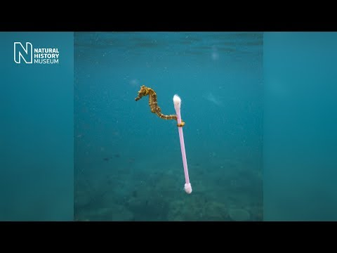 Wildlife Photographer of the Year: the reality of a sewage surfer  | Natural History Museum
