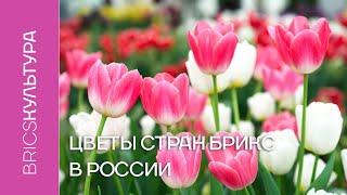 Цветы стран БРИКС в России