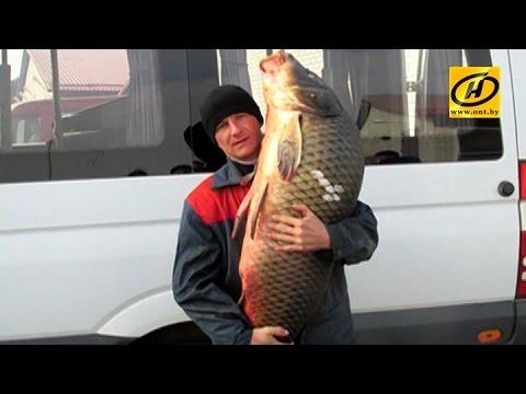 30-килограммового сазана выловил
