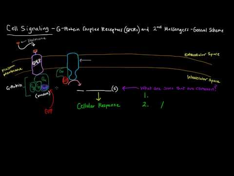 G Protein Coupled Receptors (Part 1 of 2) - 2nd Messengers - General Scheme