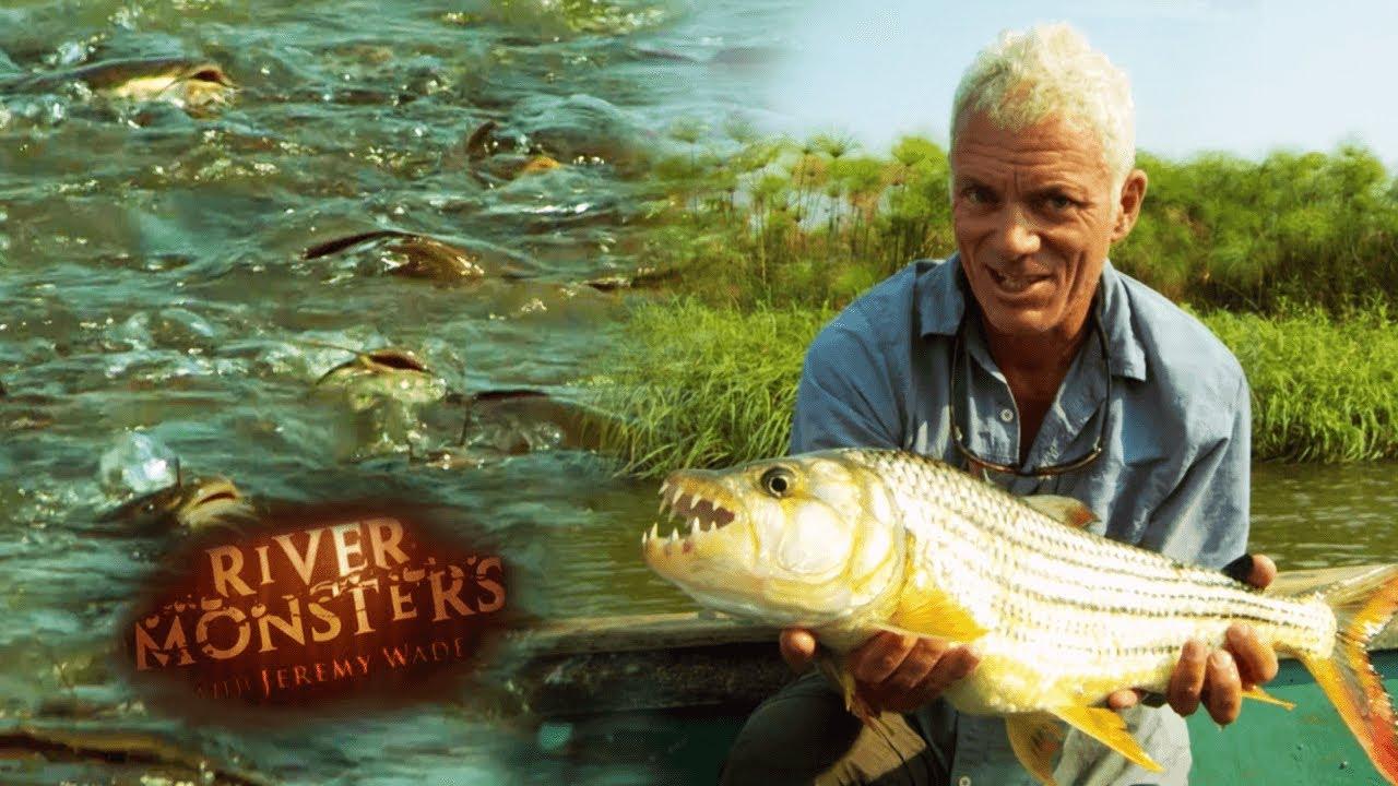 Feeding Frenzy Phenomenon | SPECIAL EPISODE | River Monsters