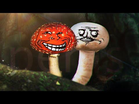 Грибы нас тролят ...  Гайд на грибы !