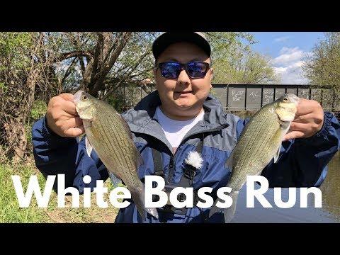 Wisconsin White Bass Run