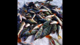 В этом озере много окуня рыбалка на Яркуле Чанах подводная съемка