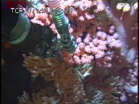Researching Deep Sea Coral