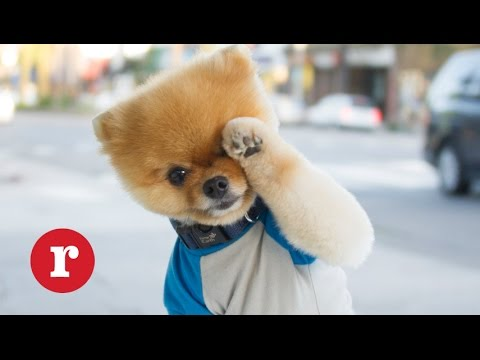 Say Hello To Jiff The Internet S Cutest Dog Redbook
