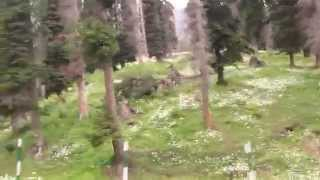 "ULTIMATE BEAUTY OF GULMARG (""MEADOW OF FLOWERS"") ON THE WAY TO KHILANMARG GULMARG FROM YUSMARG (J&K)"