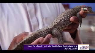 الأخبار - غرب سهيل...قرية نوبية شاهدة على تحول التمساح من حيوان مفترس إلى أليف