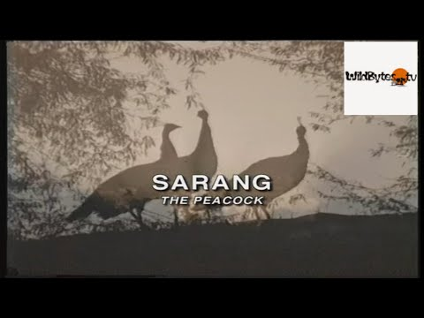 Sarang - The Peacock -A film on the National Bird of India