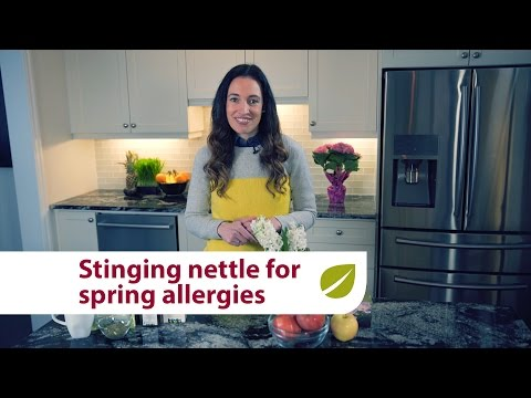 Stinging Nettle | Natural Relief for Spring Seasonal Allergies