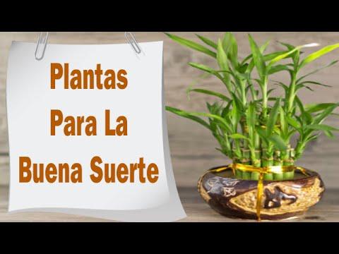 Plantas Para La Buena Suerte El Amor Y El Dinero Youtube