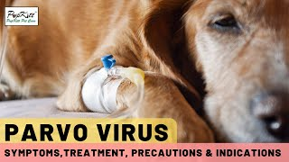 Parvo Virus In Dogs: Symptoms, Treatment & Precautions | Dr. Anirudh Mittal