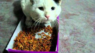 Hungry street cat eating and making funny noises at the same time