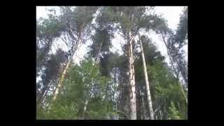 2006. Кенозерский национальный парк (мастерская ТВ)(, 2013-08-28T14:58:00.000Z)