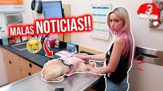 DE EMERGENCIA AL VETERINARIO!!!🚨 PRINCESA con INFECCIÓN GRAVE 😭🐶 VLOGMAS #3