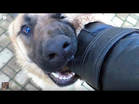 Вопрос: Почему собака кусается?