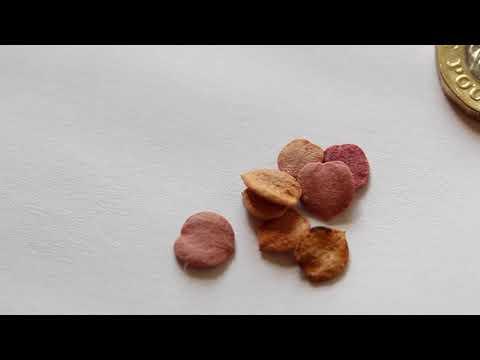 Snowball Tree Seeds - Viburnum Opulus