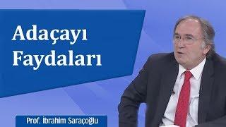 Adaçayı Faydaları İbrahim Saraçoğlu