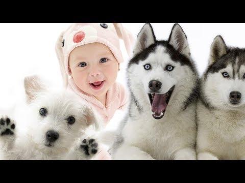 ТОП Собаки для детей | Хаски или Маламут ?