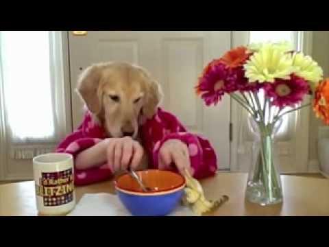 Smieszne Zwierz Ta Pies Je Niadanie Przy Stole Youtube
