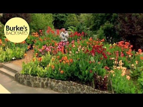 Burke's Backyard, Canna Lilies
